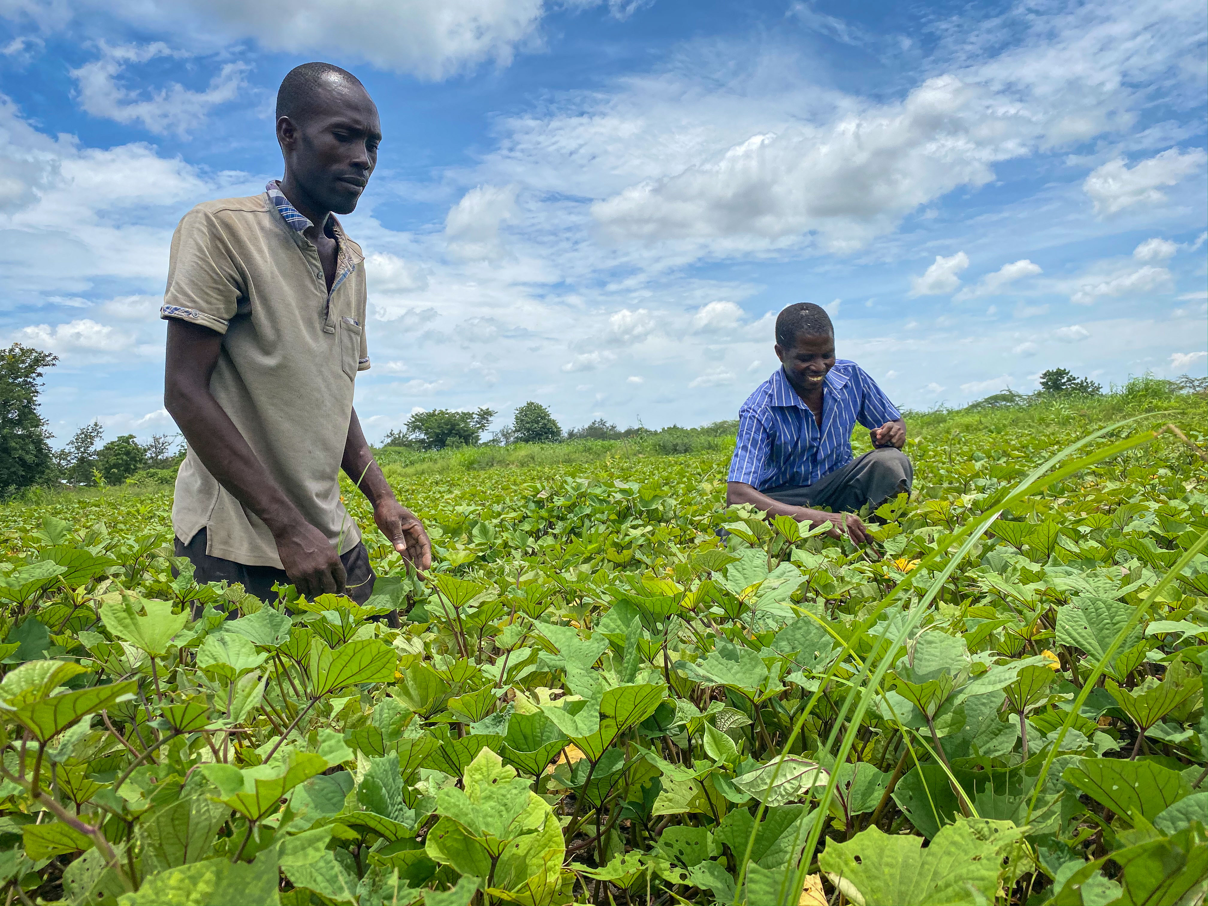 The Fund will increase investments in Malawi's agro-industry and value chains.